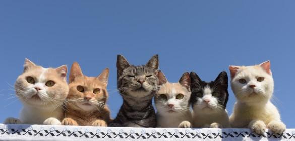 世界から猫が消えたならのキャベツ役パンプ君のプロフと画像まとめ