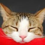 夏先取りで知っておきたい!猫の熱中症対策と症状