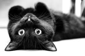 [初級編]猫を飼うなら知っておきたい本当に正しいしつけ方法