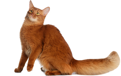 [毛柄別性格辞典]クラシックタビーなど、柄別猫の性格まとめ