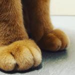 猫の脱走防止に必要なことって?