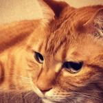 猫がわざと物を落とす癖を治したい!理由から見た原因と対策まとめ