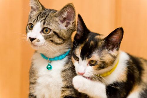 老人が里親募集で断られるのはなぜか?シニアでも猫を引き取って飼う方法とは?