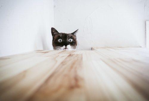 [驚愕動画]猫のだるまさんが転んだが衝撃的!この動きの理由と遊び方まとめ