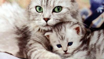 [母猫に学ぶ教育方法]子猫のしつけするための3つの方法
