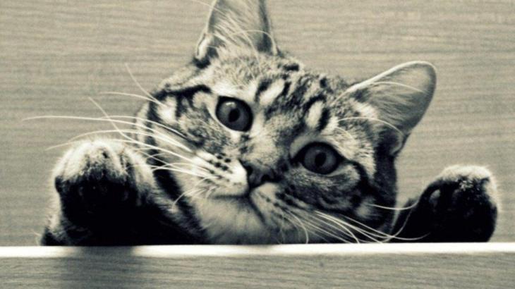 猫にも厄年があるって本当!?
