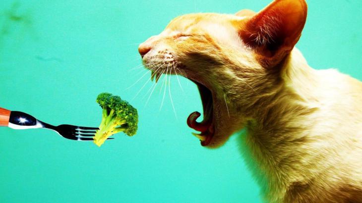 猫に絶対与えてはいけない人間の食べ物とダメな理由について