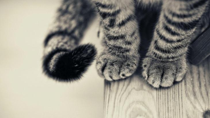 猫が同じ行動を繰り返す・・病気のサインの可能性が!?