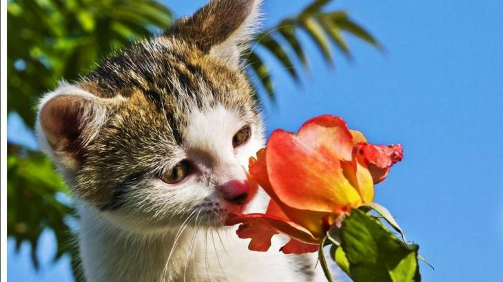 猫の危険な誤食ランキングトップ5