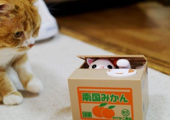 猫ちゃんびっくり!猫型貯金箱で猫と遊ぶ