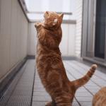 インスタグラムで話題の猫特集