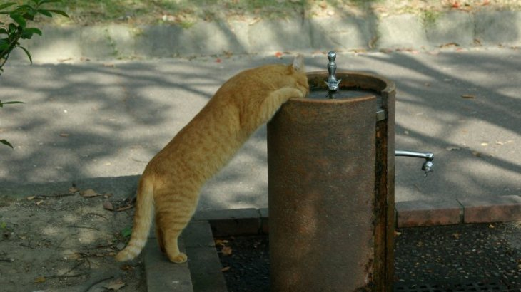猫が吐く原因って何?病気が潜んでいるケースと正常な嘔吐の違いまとめ