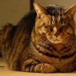 猫の認知症を防ぐための普段から簡単にできる行動とは?
