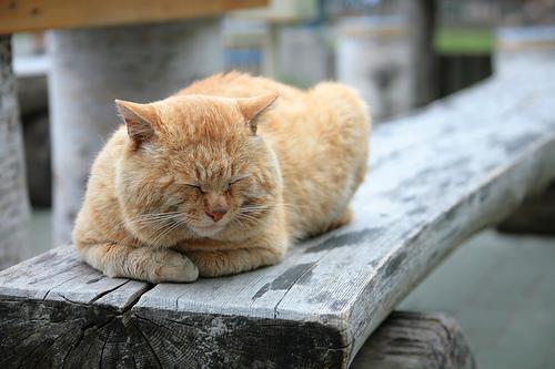 [すやぁ・・]猫が落ち着く音楽が科学的に立証される!?検証してみた結果がすごい件