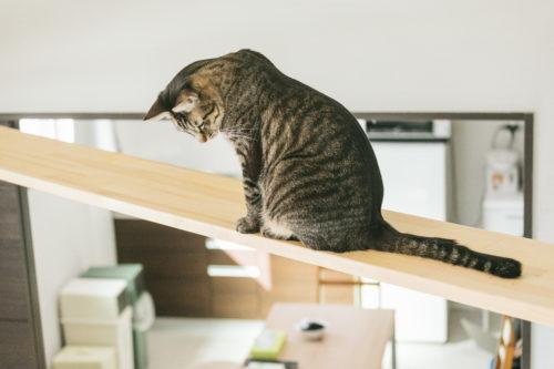 [なんで!?]猫がおもむろに机の上の物を落とす2つの理由と心理