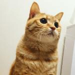 多頭飼いでは猫のダイエットが難しい!?どうやって痩せればいいのか?