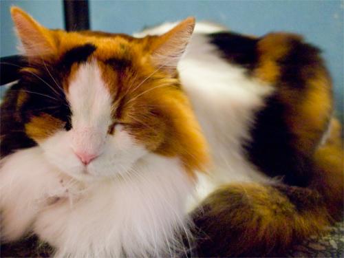 猫の喜ぶポイントを知っておけば懐かせるのは簡単な理由3つ