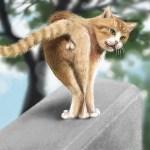 猫のお尻歩きに要注意!なぜお尻を床にこすりつけて歩く3つの理由とは?