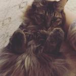 [へそ天注意]なぜ猫は腹を出してゴロゴロするのか?