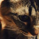 [子猫から保護猫まで]猫が夜泣きをする原因と理由って何?知っておきたい夜鳴き対策