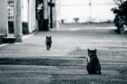 室内飼いの猫が脱走後に捕獲器は有効?脱走猫の捕まえ方のコツまとめ