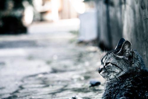 猫が脱走する理由って何?脱走しやすい猫5つの特徴と治し方
