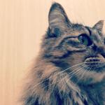 野良猫を保護した時一緒に暮らすための注意点と必要なものまとめ