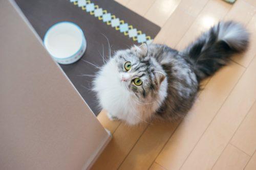 猫がベルを鳴らす動画を見るけどどうやって教えたらいいの?