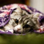 猫がふみふみする理由としながらゴロゴロ言う心理って何?猫の気持ちを考えてみた