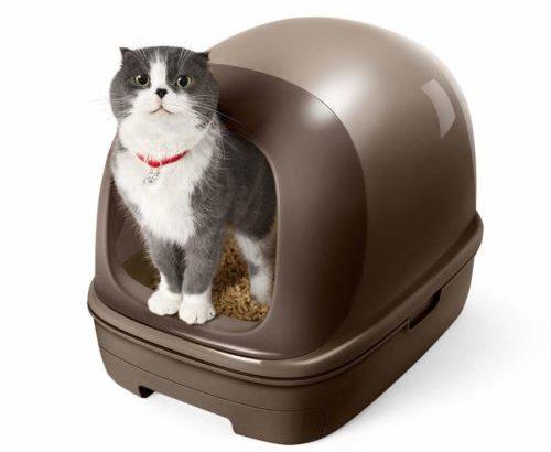 [保存版]猫を飼う時に必要なものと費用完全マニュアル