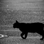 [受信!?]猫がしっぽをぷるぷる震わせるのはなぜなのか?