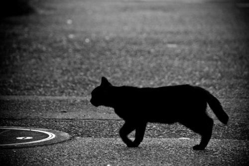 しっぽ ぷるぷる 猫
