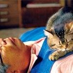 「ねことじいちゃん」ロケ地となる佐久島ってどんなとこ? キャストや出演猫の正体とは?