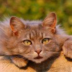 [動画や画像でチェック]猫のフレーメン反応の意味が面白すぎるのでシェアする