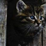 子猫にまたたびはやばい!与えても大丈夫な年齢とは?