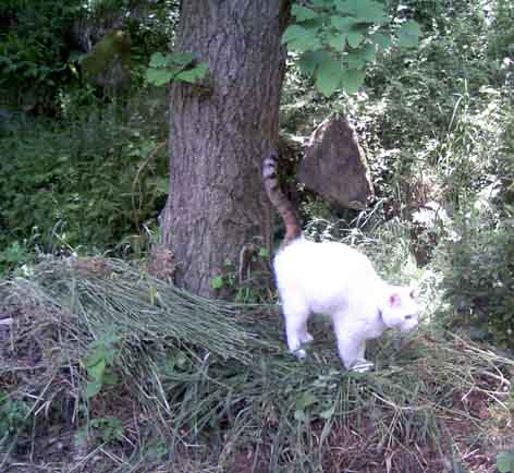 「猫のマーキング」の画像検索結果