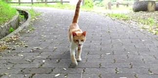 撫でられにくる猫