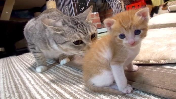 猫部屋に来た子猫