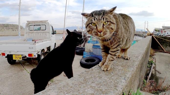 猫のケンカの仲裁