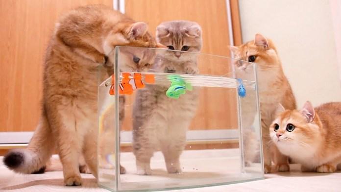 魚が気になる猫達