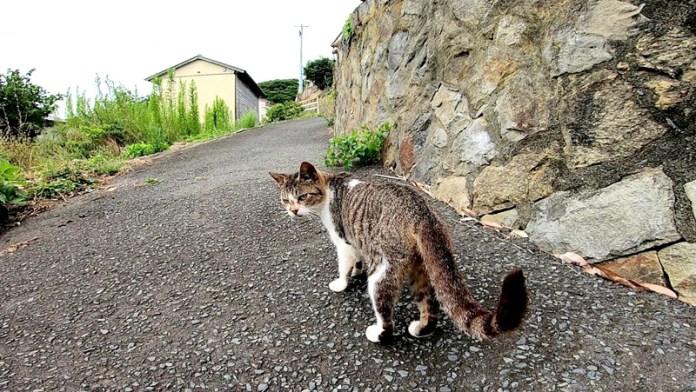 集会に案内する猫