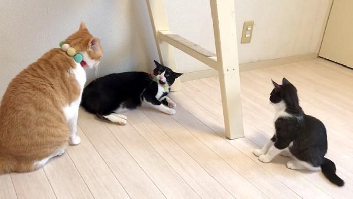 成猫同士のケンカを目撃した子猫