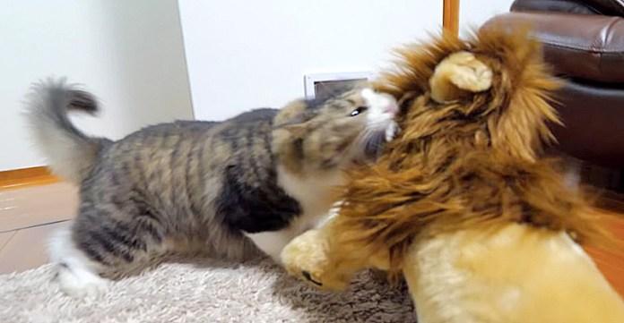ライオンとボス猫