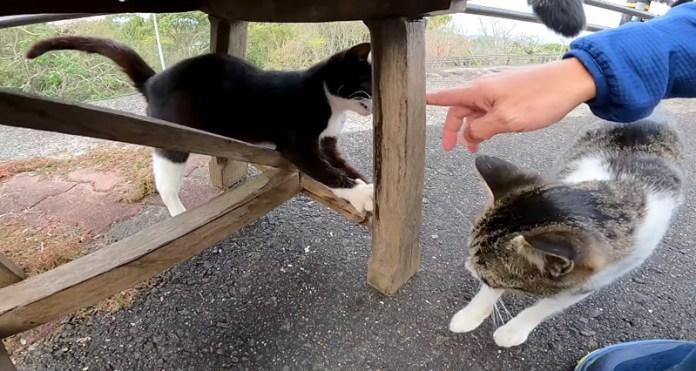 集まって来た猫達