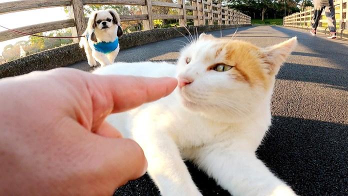 犬に愛される猫