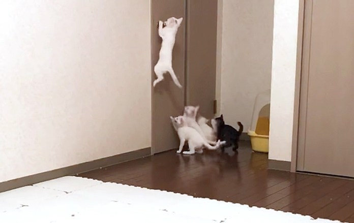 飛びつく子猫