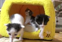 猫ハウスと子猫達