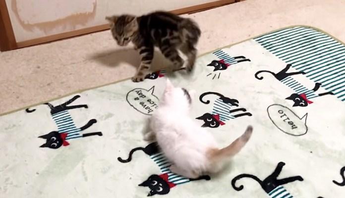 駆け回る子猫達
