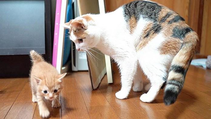 先住猫と子猫が対面