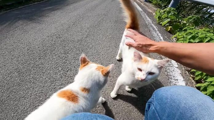 撫でられに来る猫
